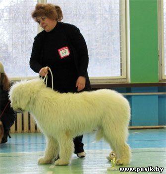 [Изображение: Puppy_6.jpg]