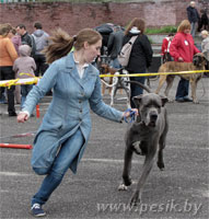 [Изображение: Dog_4L.jpg]