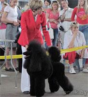 [Изображение: Poodle_black_11_L.jpg]
