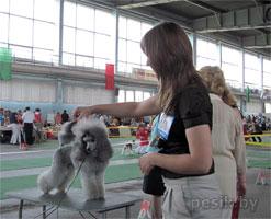 [Изображение: Poodle_silvery_2_L.jpg]