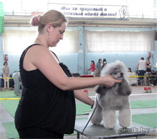 [Изображение: Poodle_silvery_L.jpg]